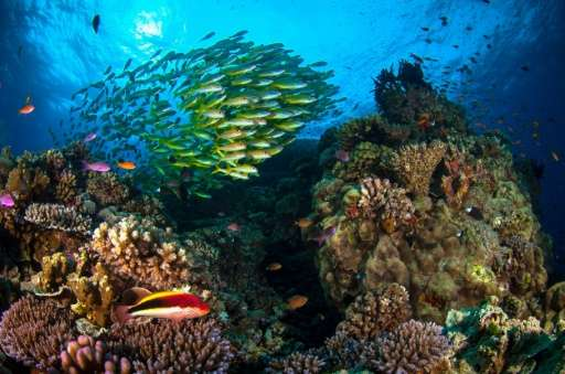 Australia's Great Barrier Reef is suffering its worst bleaching in recorded history