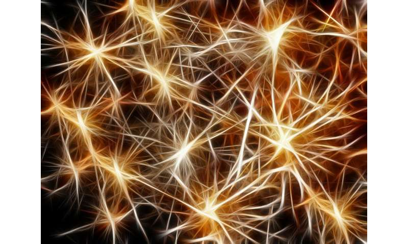 Discovering the neural mechanisms of skill learning