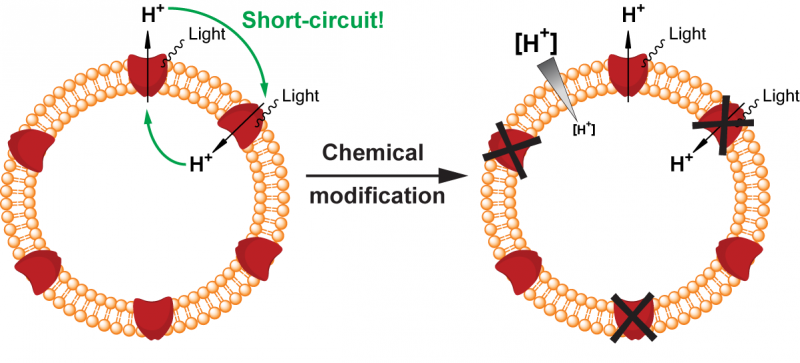 Engineering a chemical switch into a light-driven proton pump
