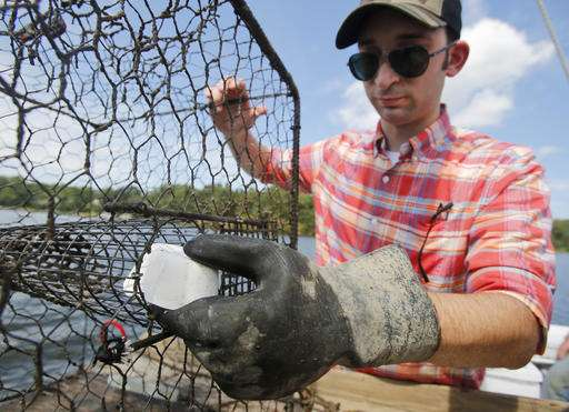 Goodbye, herring? Biotech bait gives lobstermen alternative