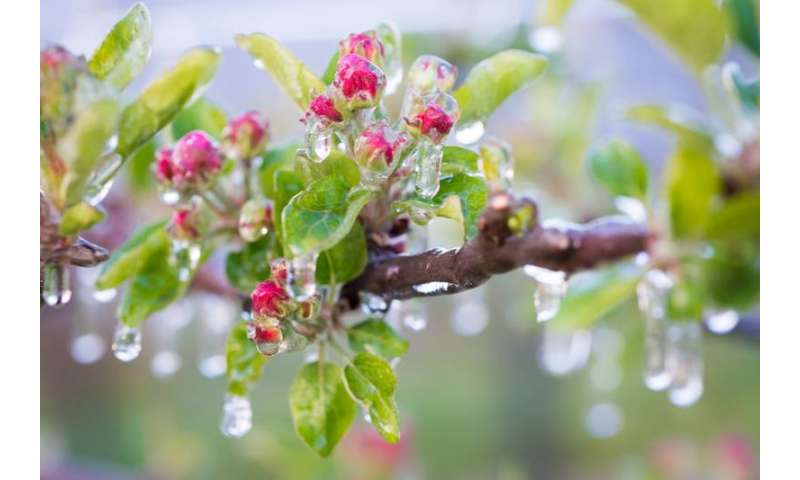 New mechanisms uncovered explaining frost tolerance in plants