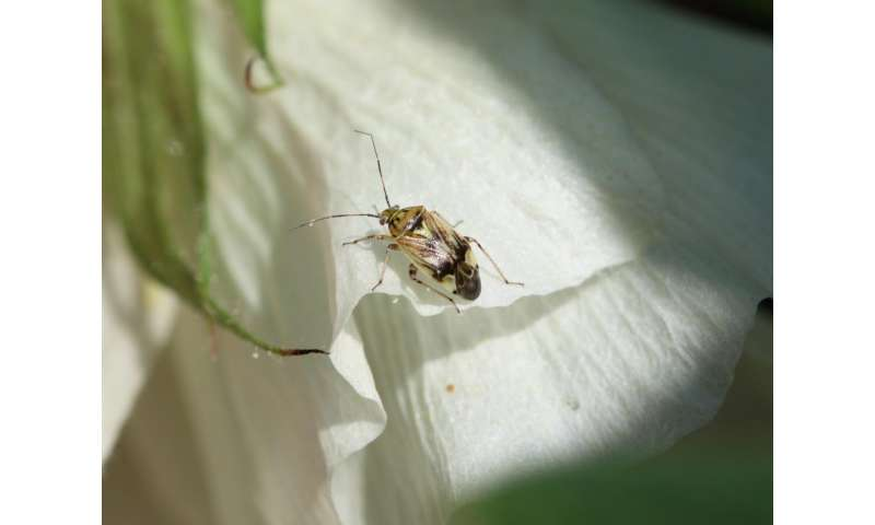 New technology could improve insect control in cotton