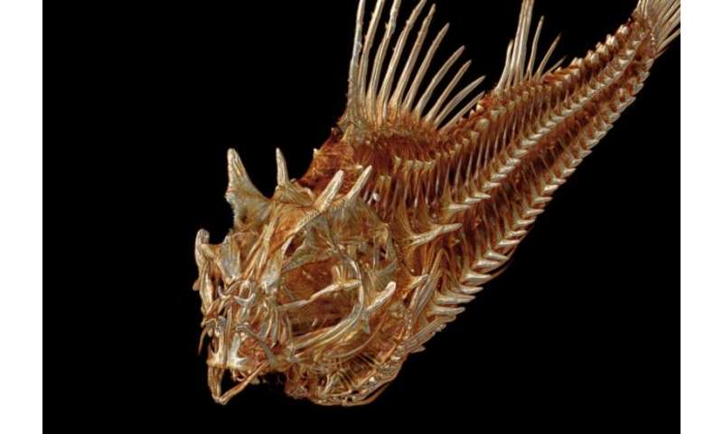 Professor digitizing every fish species in the world