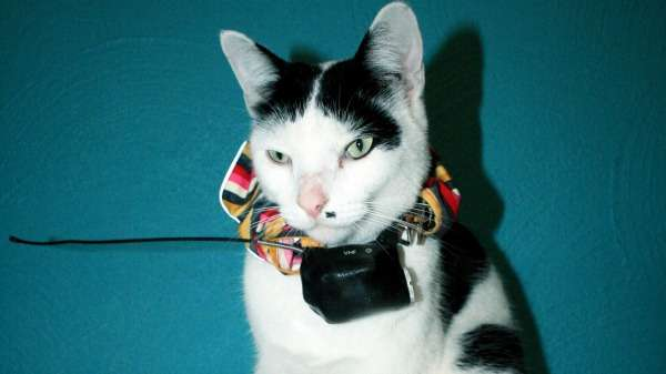 Researchers use GPS trackers to determine how far domestic cats roam