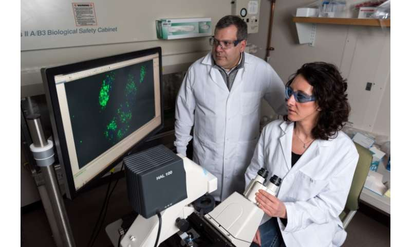 Scientists demonstrate basics of nucleic acid computing inside cells
