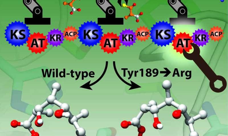 Researchers tweak enzyme 'assembly line' to improve antibiotics