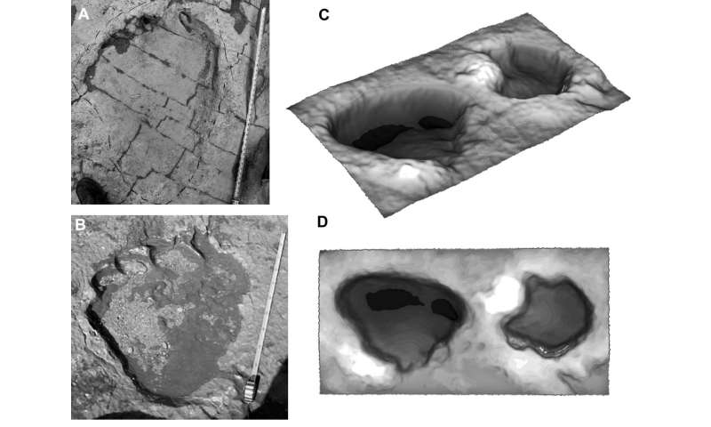 Scientists find new conclusions for how sauropod claws were used