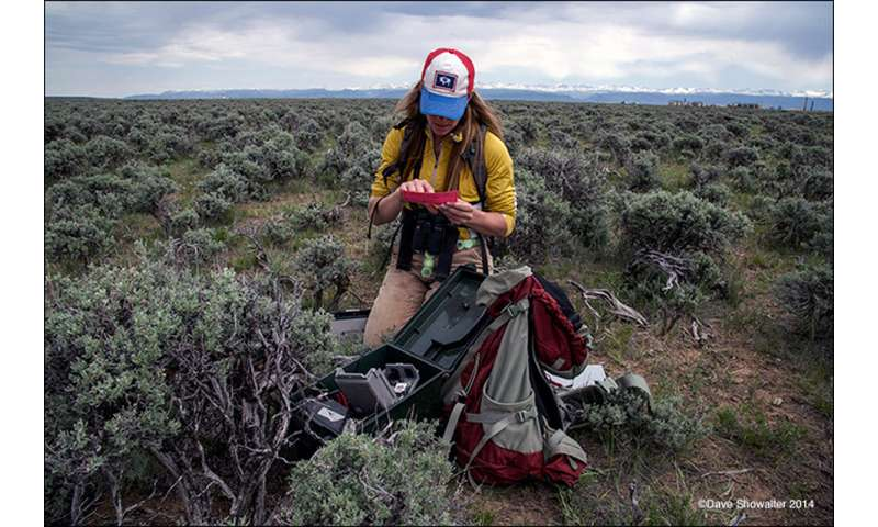 Researcher studies increased predation of sagebrush songbirds in natural gas fields