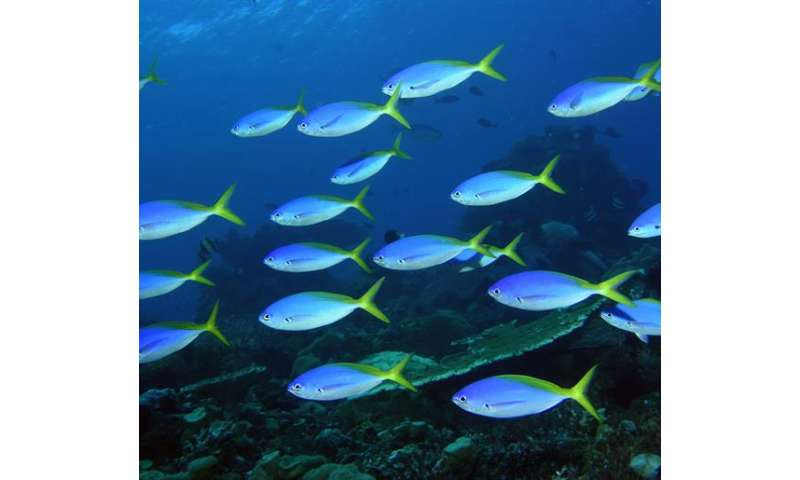 Biodiversity-survey-reveals-reefs-in-Timor-Leste-s-Atauro-Island-hold-the-worlds-highest-reef-fish-species-average-