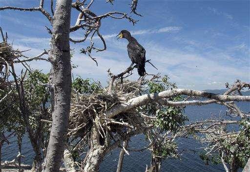 Decision on reviled sea birds has foes feeling helpless