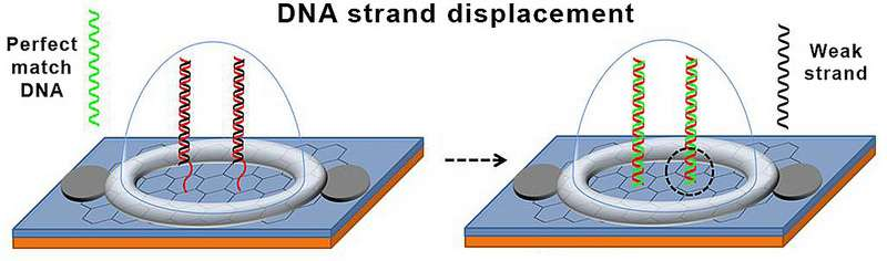 Engineers develop a new biosensor chip for detecting DNA mutations