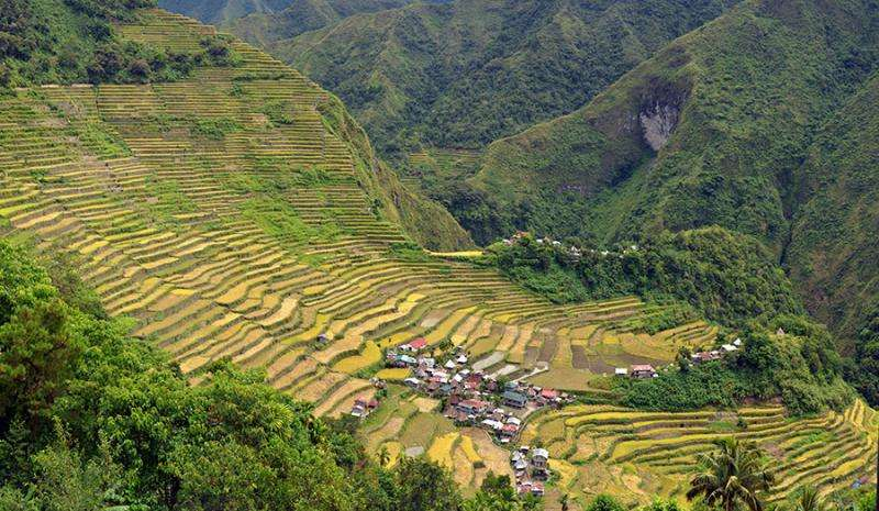 Genetically modified Golden Rice falls short on lifesaving promises
