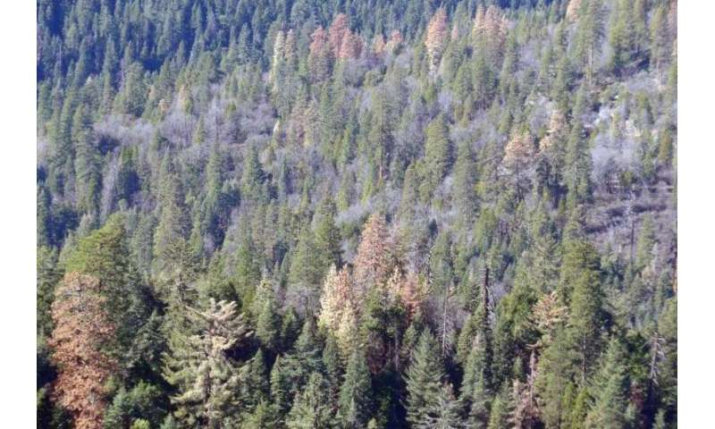 Increasing drought threatens almost all U.S. forests