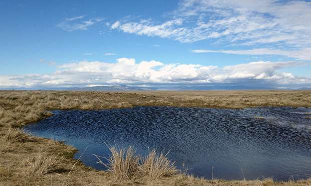 New technique tracks 'heartbeat' of hundreds of wetlands