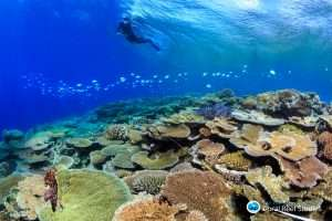 Scientists assess bleaching damage on Great Barrier Reef