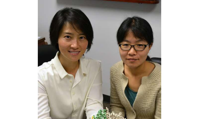 TSRI scientists find new cancer drug target in dual-function protein