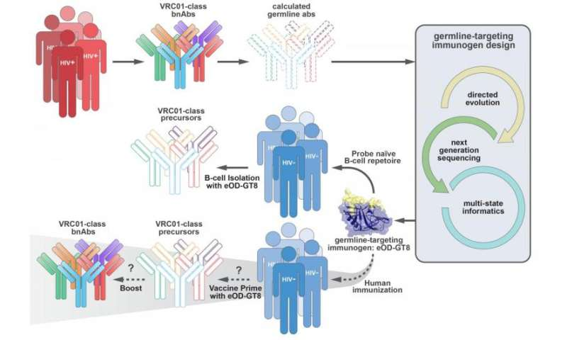 Findings in humans provide encouraging foundation for upcoming AIDS vaccine clinical trial