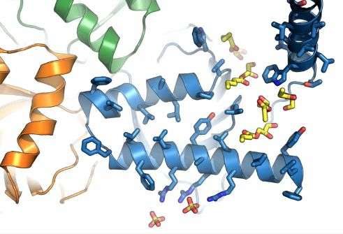 Researchers determine structure of unique receptor linked to neurodegeneration