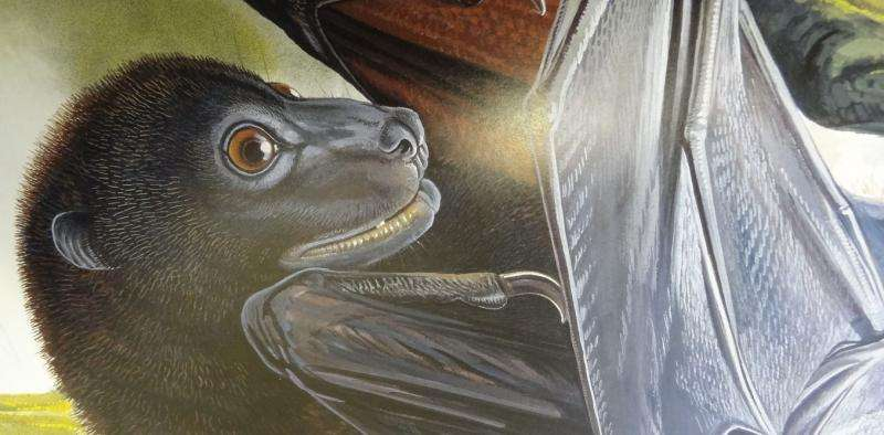 Solomon Islands expedition seeks to conserve the extraordinary monkey-faced bat and giant rat