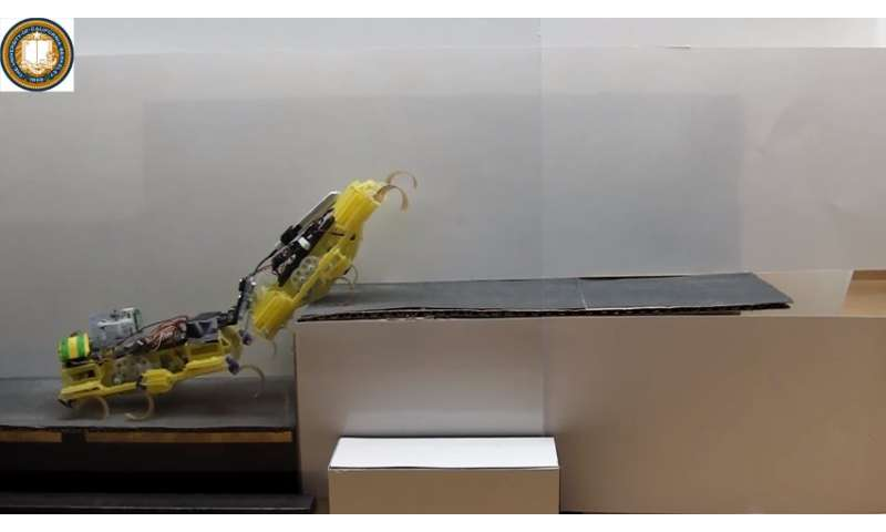 Researchers see the power of two in robot roaches making climb