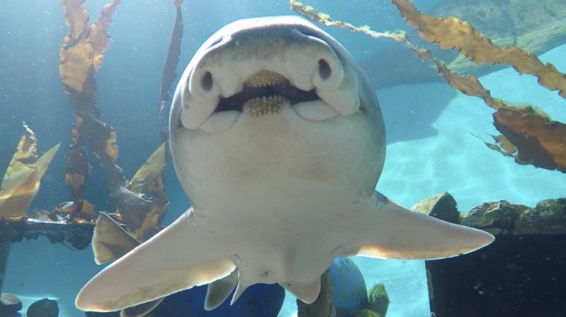 Study shows sharks have personalities