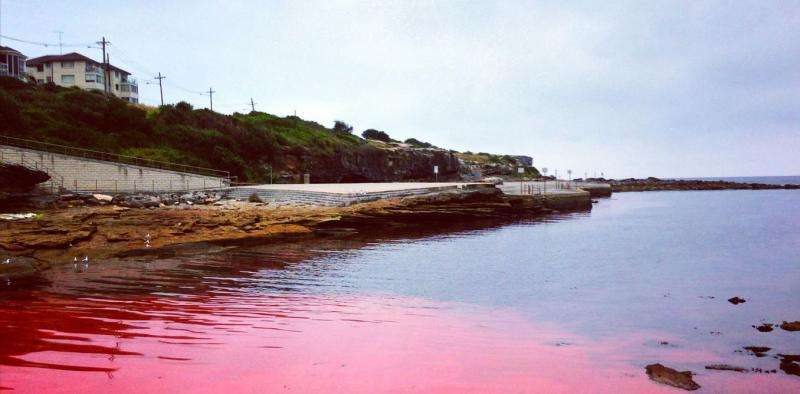 Collecting data to help protect Australia's waters from toxic algal blooms
