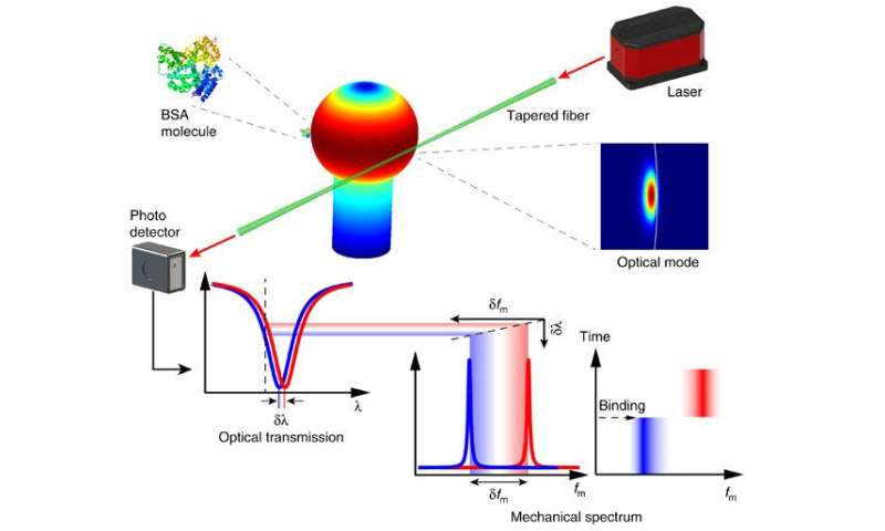 Optical spring detects single molecules