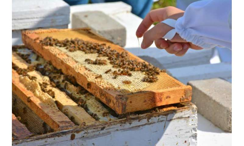 Land-use change rapidly reducing critical honey bee habitat in Dakotas