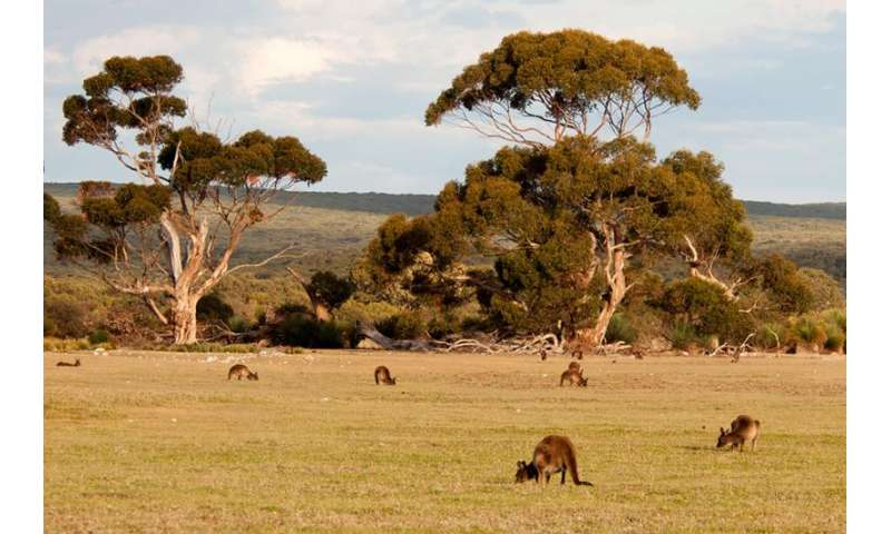 Kangaroo Island could be powered by 100 percent renewable energy