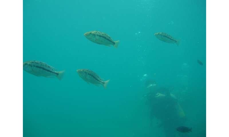 Environmental change drove diversity in Lake Malawi cichlids