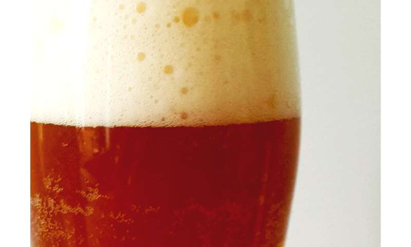 Beer yeasts show surprising diversity, genome study finds