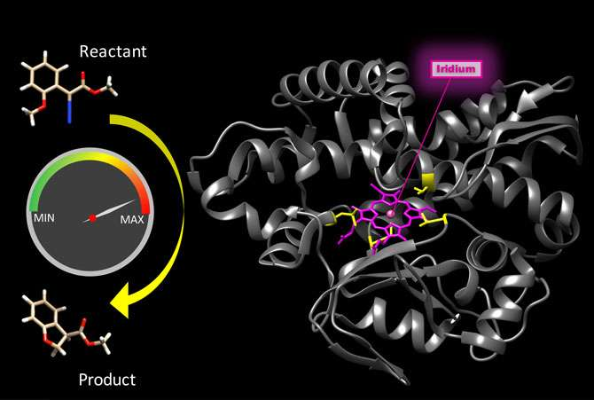 Scientists rev up speed of bionic enzyme reactions