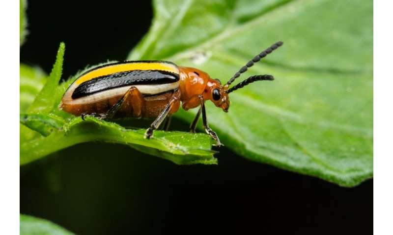 Plant diversity could provide natural repellent for crop pests