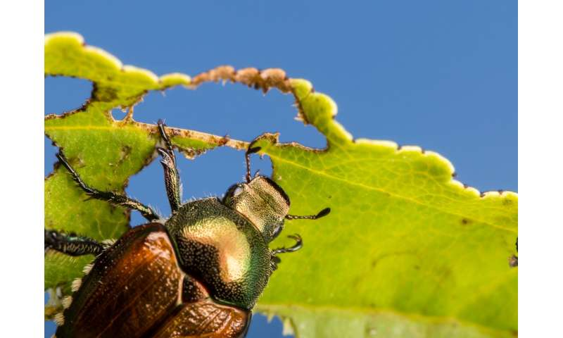 Why insect pests love monocultures, and how plant diversity could change that