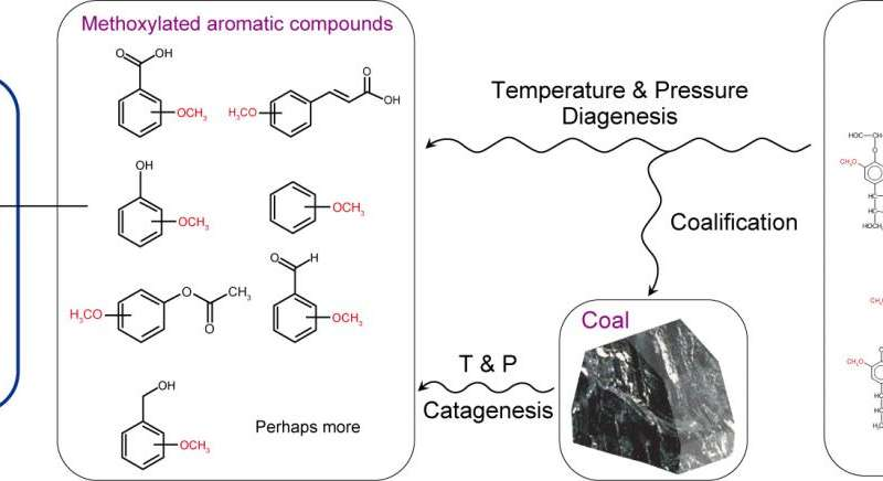Researchers discover microbes able to convert compounds released from coal directly into methane
