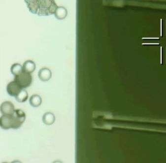 Scientists develop a semiconductor nanocomposite material that moves in response to light