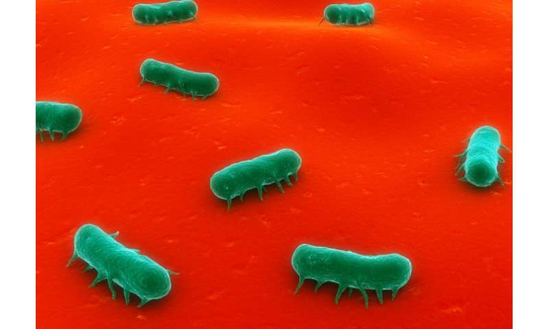 Bacteria 'alarm clock' may cause repeat infections in patients