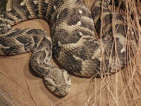 Snake black market poses risk to humans and wildlife