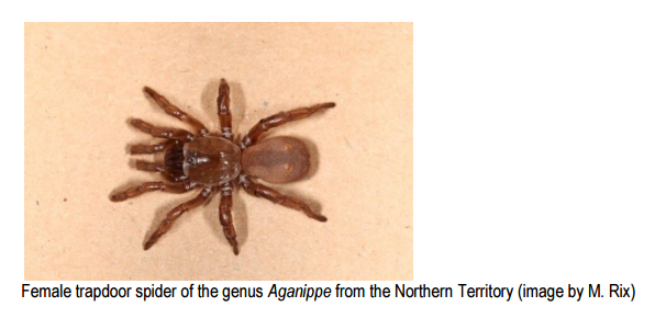 Trapdoor spiders disappearing from Australian landscape
