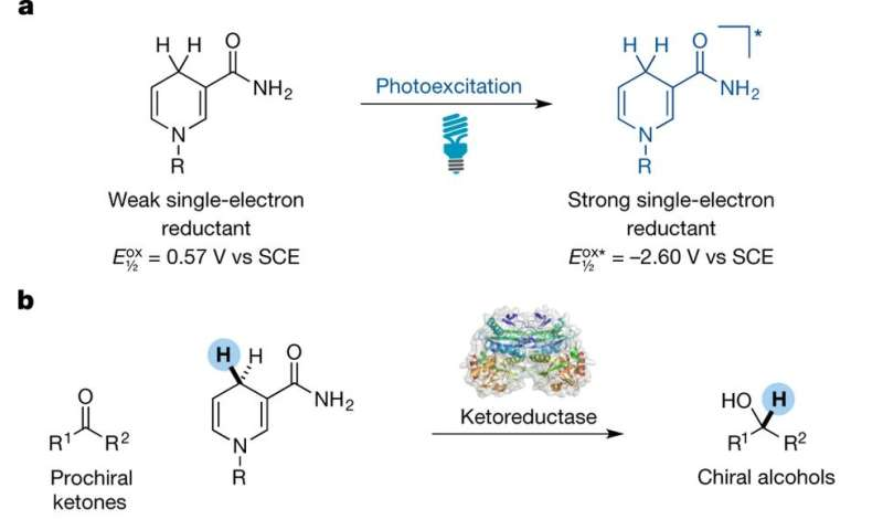 Method devised that allows a ketoreductase enzyme to catalyze non-natural reactions