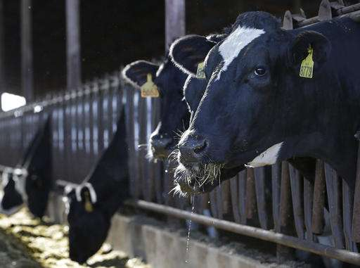 California targets dairy cows to combat global warming