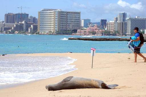 Deadly cat poop causes rift among animal defenders in Hawaii