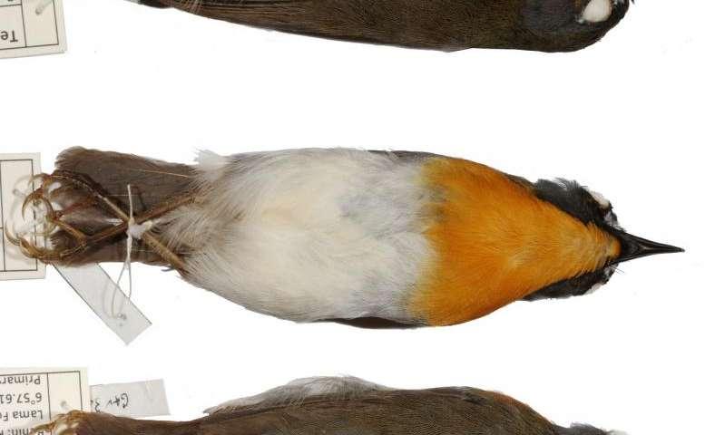 Team discovers three new bird species in Africa
