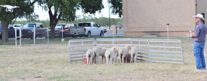 Researchers study practicality of drone use in ranching