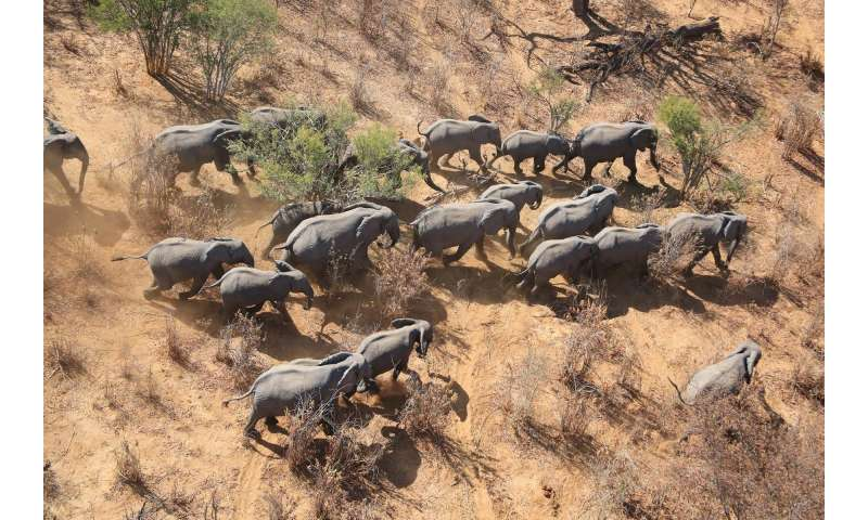 aerial surveys of elephants and other mammals may underestimate numbers