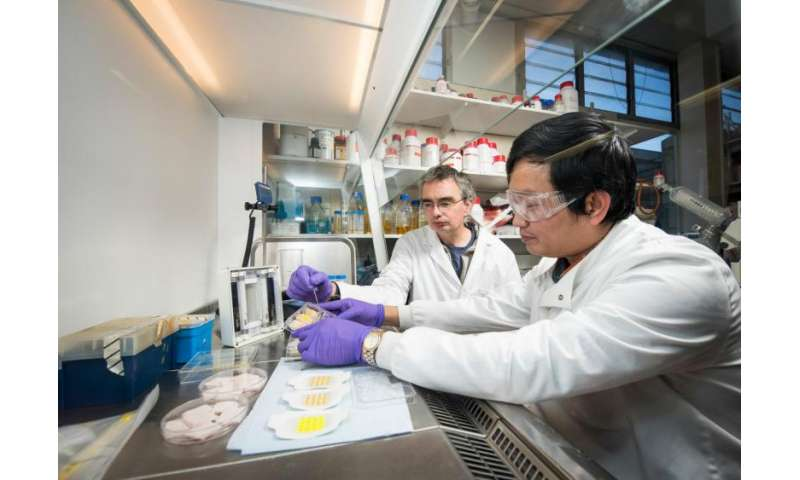 Clinical trial of infection detecting bandages begins