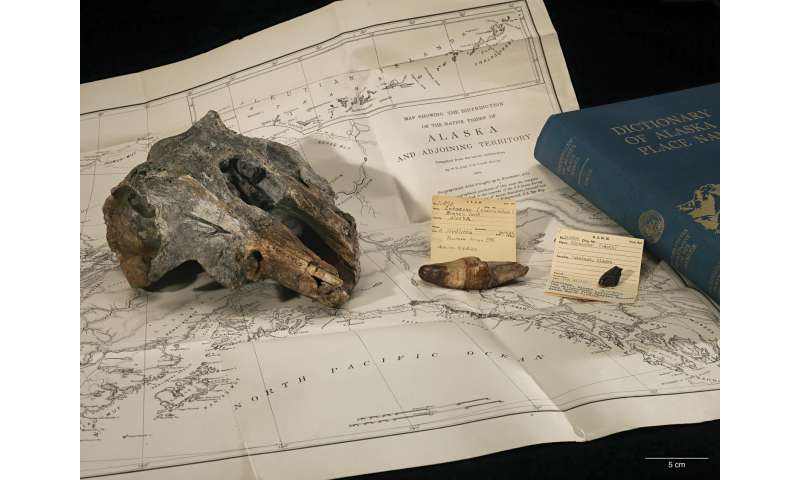 New species of extinct river dolphin discovered in Smithsonian collection