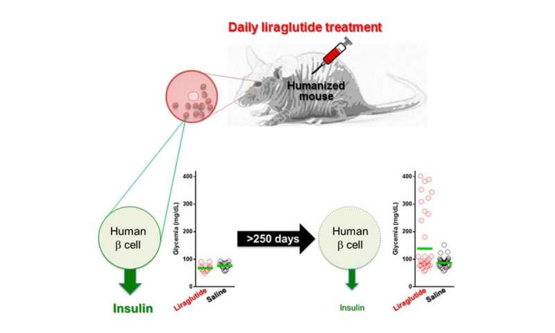Researchers urge further study on long-term safety of promising diabetes drug