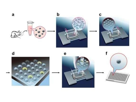 New method for exhaustively isolating olfactory receptors responding to specific odorants