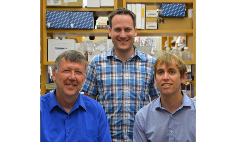 TSRI scientists discover antibodies that target holes in HIV's defenses